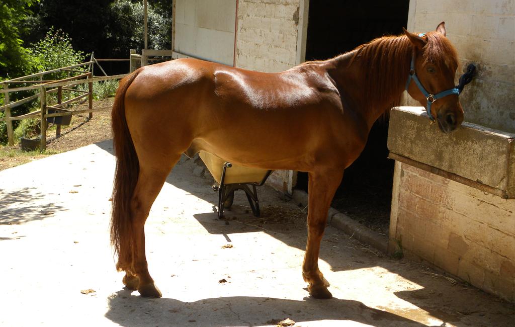 caballo1-1024