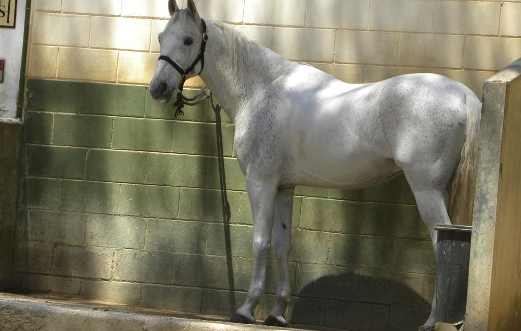 caballo2-1024