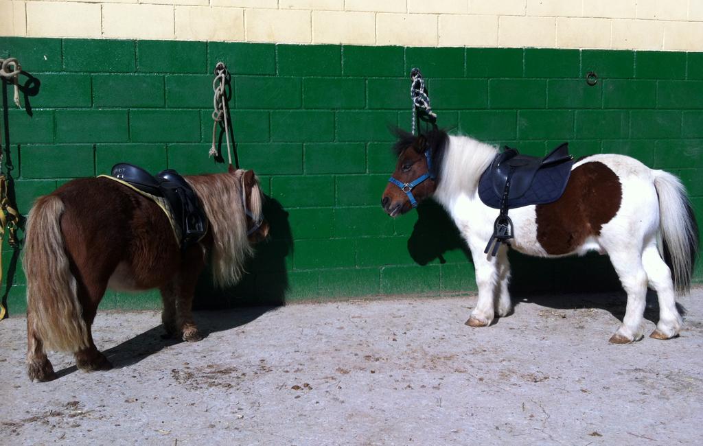 caballos3